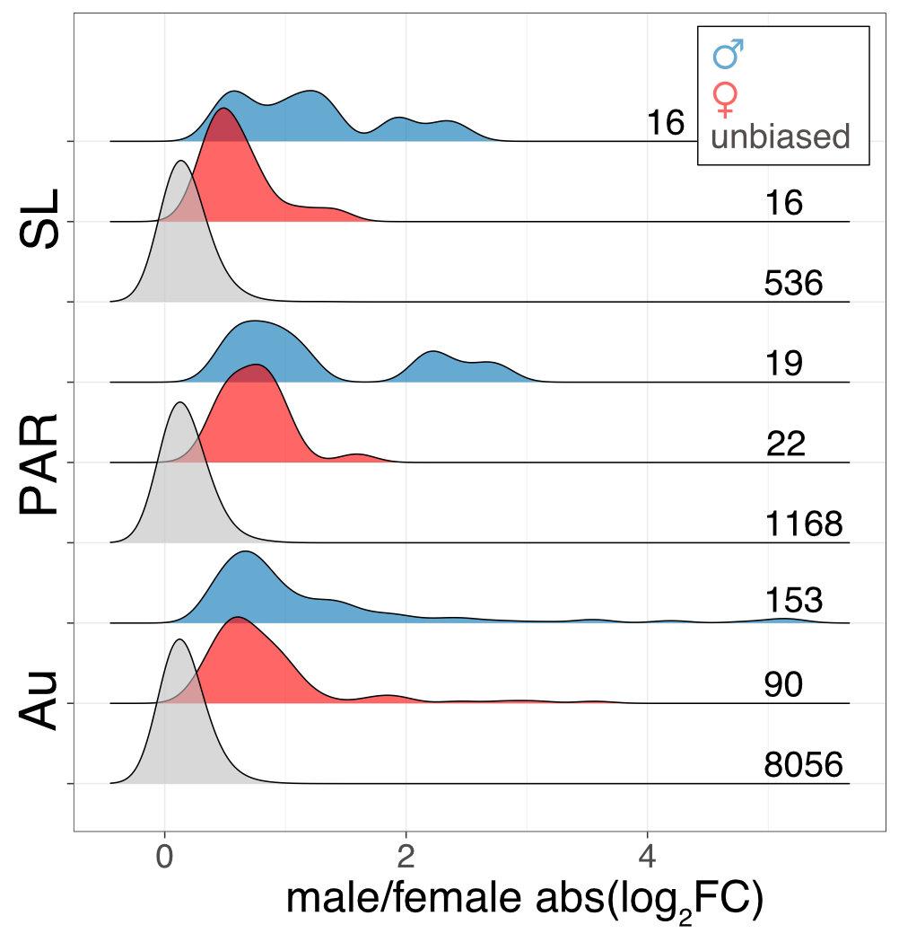 sex biased genes